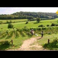Chateau Gilbert wijn